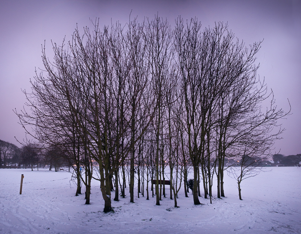 Trees at dusk, snow in Buckingham Park, Shoreham-by-Sea, West Sussex.  Landscape photo by Jenny Rutterford