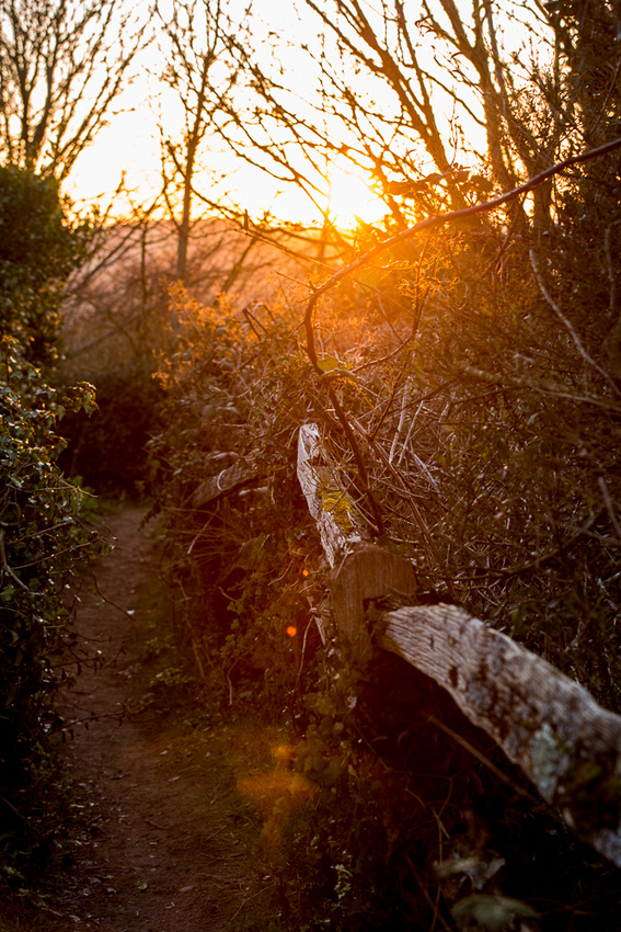 """""""Into the Light"""" - walk along the bridleway at Mill Hill, Shoreham-by-Sea, West Sussex.  Photo by Jenny Rutterford Photography."""
