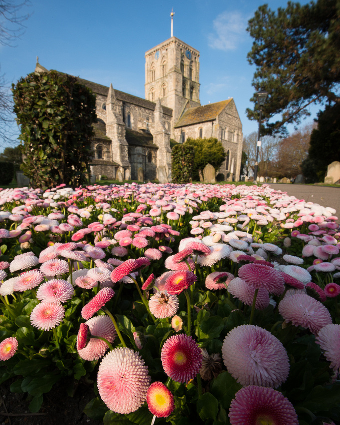 Beautiful pink and white floral carpet leading up to St Mary de Haura church, Shoreham-by-Sea.  Photo by Jenny Rutterford Photography.